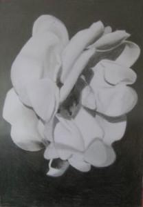 Blomma. Blyerts på papper. 15 x 21 cm.